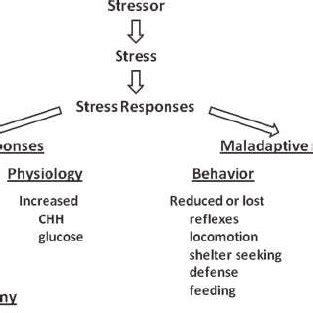 A literature review on stress and coping strategies in